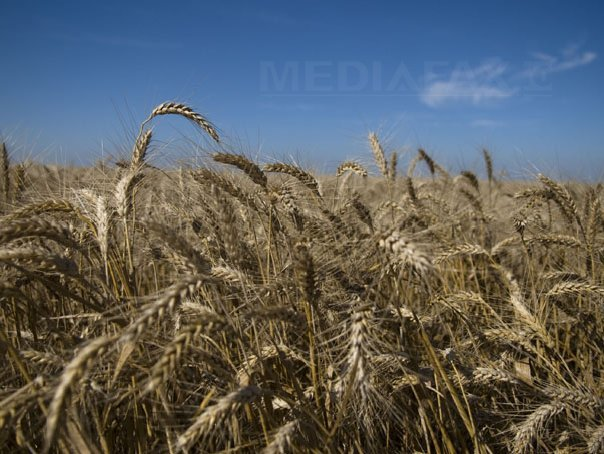 Egiptul a platit 15,5 milioane dolari pentru 60.000 tone de gr�u din Romania