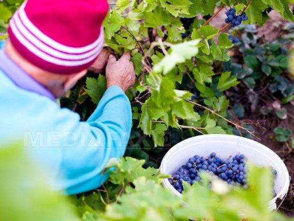 Rom�nia, pe locul 12 la nivel mondial la productia de vin