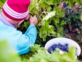 Imaginea articolului România, pe locul 12 la nivel mondial la producţia de vin