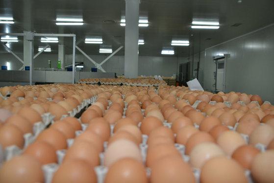 Imaginea articolului Ouăle se scumpesc cu 4-5% de la o săptămână la alta, iar în acest ritm devin o delicatesă. Preţurile au crescut cu 53% în perioada octombrie 2016-octombrie 2017.