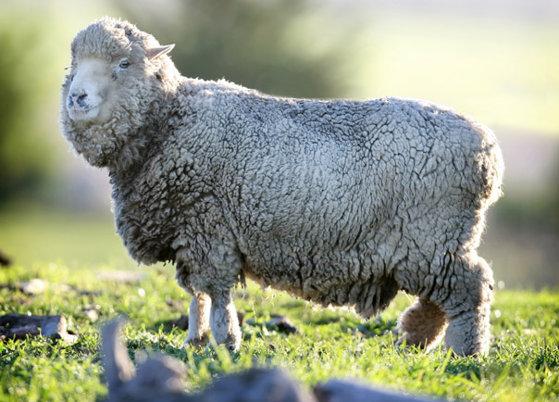 Imaginea articolului APIA: termenul de depunere a cererilor de subvenţii pentru creşterea animalelor este 2 mai