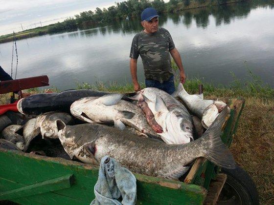 Imaginea articolului În România, consumul de peşte pe cap de locuitor este la o treime din media UE