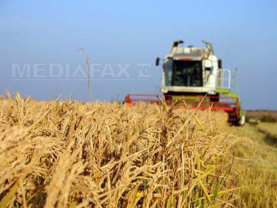 Imaginea articolului Măsurile Guvernului pentru agricultură: TVA de 9% pentru alimentele de bază de anul viitor, fond de creditare, bani suplimentari cu acordul UE