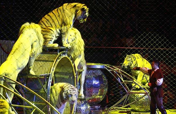 Legea care interzice folosirea animalelor sălbatice în circuri, adoptată în Parlament