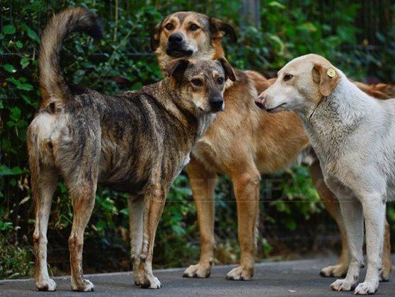 Imaginea articolului Referendumul local în cazul eutanasierii câinilor maidanezi, APROBAT de CGMB pentru 6 octombrie