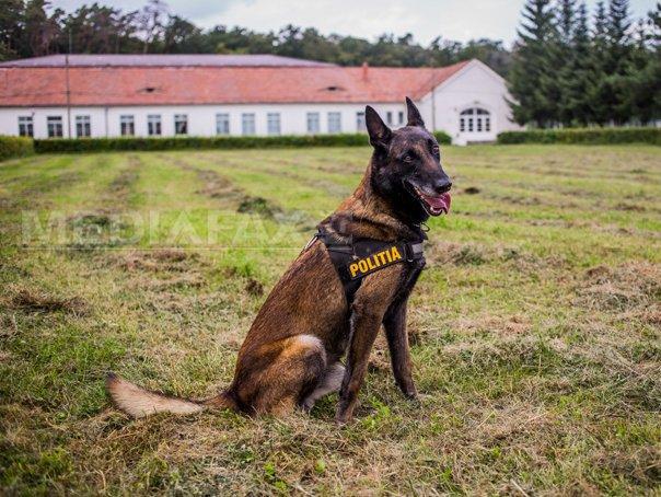 Căutare și Salvare - Clubul Câinilor Utilitari
