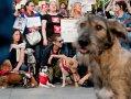 CRONOLOGIE: La un an de la moartea copilului sfâşiat de câini, maidanezii rămân o problemă