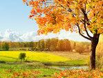 VREMEA până pe 19 octombrie. Ce temperaturi vor fi şi cât va ploua în fiecare regiune a ţării