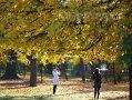 Imaginea articolului VREMEA miercuri şi joi: Prognoza meteo pentru miercuri şi joi în ţară şi în Bucureşti
