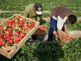 Imaginea articolului 100.000 de români care muncesc în străinătate riscă să-şi piardă serviciul. ANAF a dispus blocarea conturilor companiilor respective