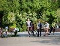 Imaginea articolului Marioara Micşunescu nu obţine în instanţă avizul de defrişare în Parcul Tineretului
