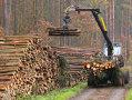 Imaginea articolului Proiect: Exportul de buşteni, cherestea şi lemne de foc să fie interzis pe o perioadă de cinci ani