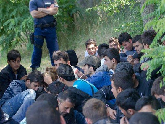 Imaginea articolului 60 de imigranţi au pătruns ILEGAL în România din Serbia. VIDEO