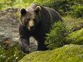 Imaginea articolului Tânăr transportat la Spitalul Judeţean Braşov, după ce a fost atacat de un urs