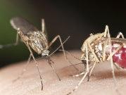 NEWS ALERT! Al TREILEA caz de infectare cu ZIKA a fost confirmat în România! Anunţul făcut de Ministerul Sănătăţii!