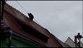 """Imaginea articolului Dosarul ursului împuşcat la Sibiu a fost mutat la Curtea de Apel Alba Iulia, """"pentru obiectivitate"""""""