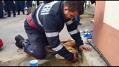 Imaginea articolului Pompierul din Argeş, care a salvat un om şi l-a resuscitat pe câinele său, l-a vizitat pe patruped la veterinar: Salut, prietene! Te rog să scapi, să o faci pentru mine