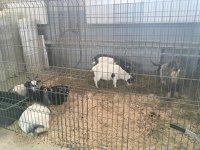 Imaginea articolului Angajaţii Circului Globus: Fără animale, circul va muri. Declaraţii pro şi contra folosirii animalelor în spectacole