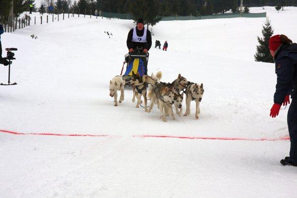 Imaginea articolului GALERIE FOTO Concurs de sănii trase de Husky şi Malamut de Alaska, în Pasul Tihuţa