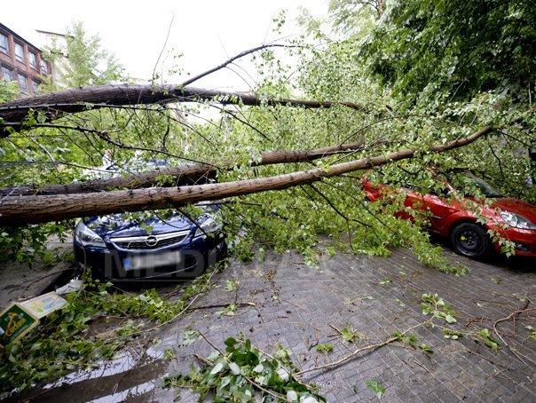 Imaginea articolului Două persoane au fost rănite în Suceava, după ce un copac rupt de vânt a căzut peste maşina lor