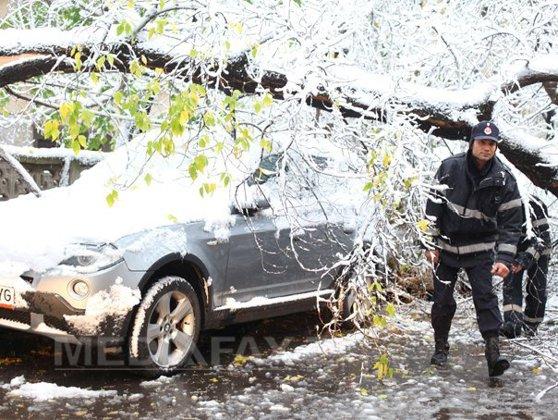 Imaginea articolului Maşini avariate la Braşov după ce au căzut peste ele copaci. Cinci străzi sunt blocate de arbori
