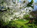 Imaginea articolului Vremea va fi frumoasă. PROGNOZA METEO pentru miercuri şi joi
