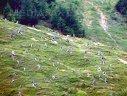 Imaginea articolului Poliţiştii, sesizaţi de 30 de ori pentru defrişări ilegale în pădurile din Bistriţa-Năsăud