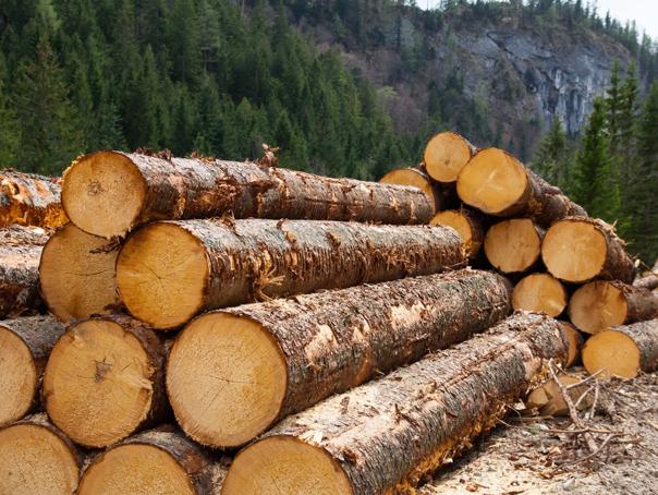 Imaginea articolului IGPR: Aproape 1.000 m3 de material lemnos fără acte legale, descoperite la o societate din Călăraşi