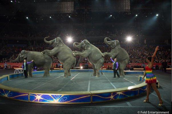 Imaginea articolului Folosirea animalelor în circuri, interzisă cu excepţia câinilor, cailor, delfinilor şi a unor păsări/ Fundaţia Vier Pfoten: Fundaţia poate reloca animale de la circ şi va suporta costurile