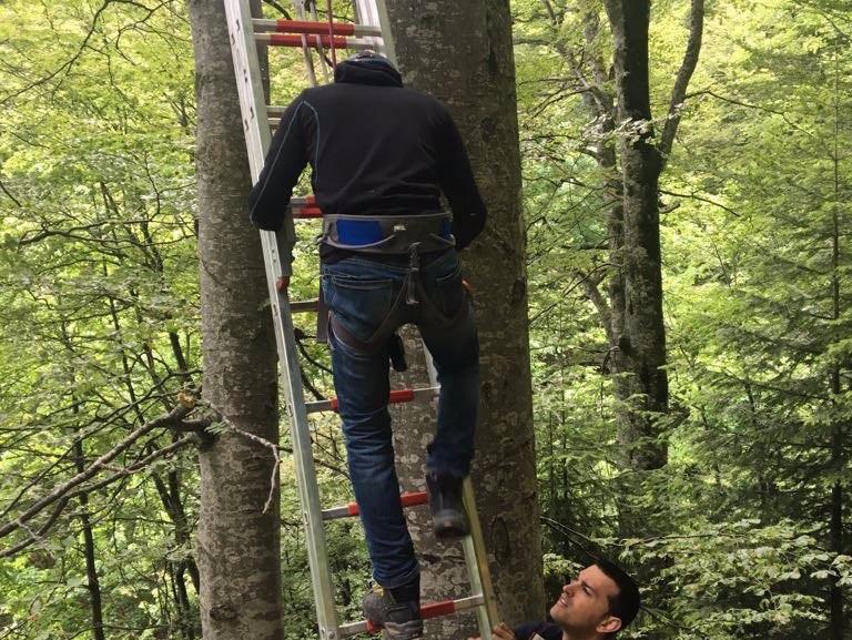 FOTO Un parapantist rus a rămas agăţat într-un copac la Sinaia, la o înălţime de zece metri
