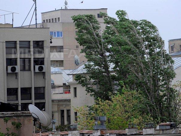 Furtună în Bucureşti şi Ilfov: Mai mulţi copaci au fost doborâţi de vânt. Două persoane rănite