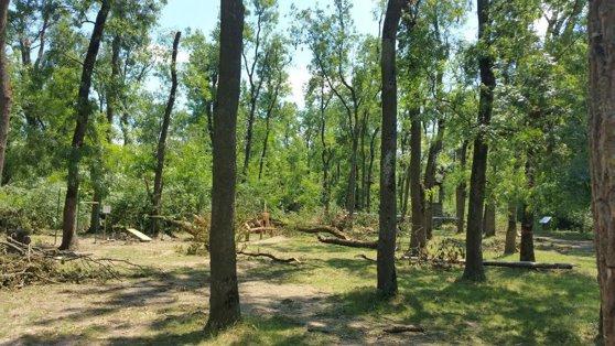 Imaginea articolului FOTO | Pădurea Ceala din Arad, DEVASTATĂ de furtună: Mii de copaci au fost doborâţi