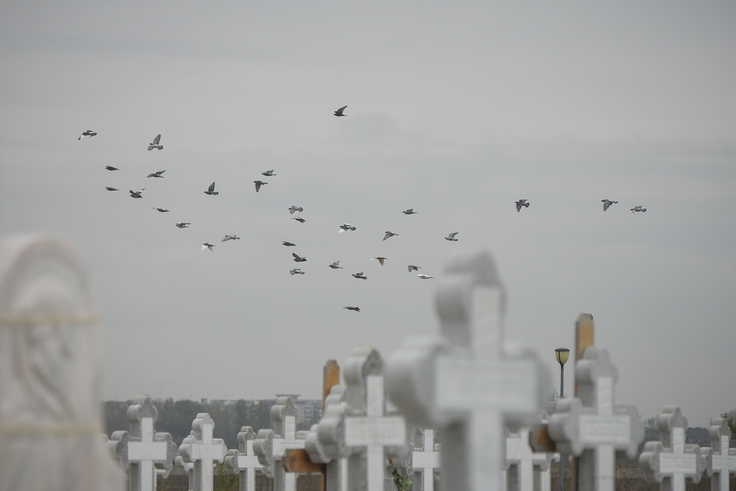 O femeie din judeţul Timiş, obligată să plătească familiei fiului său daune pentru inscripţia de pe mormânt