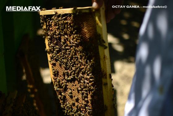 Imaginea articolului Un bărbat din Iaşi a murit după ce a fost atacat de sute de albine, pe un drum agricol