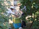 Imaginea articolului Alertă în Ploieşti: cuiburi cu zeci de mii de albine pe Palatul Culturii, mutate de pompieri, cu ajutorul apicultorilor