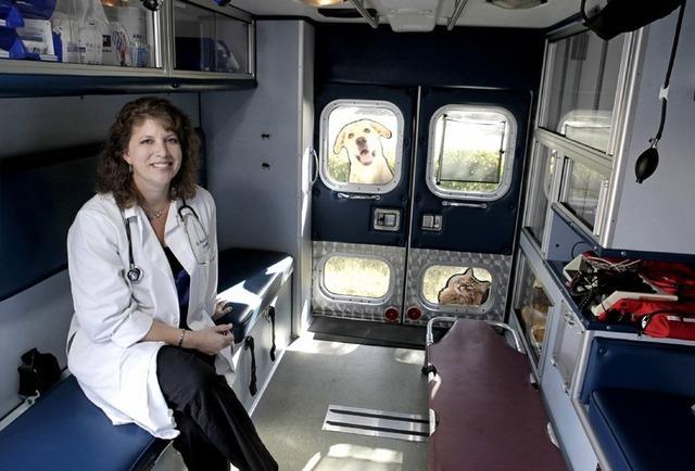 Cât sunt dispuşi să plătească stăpânii pentru o ambulanţă destinată animalelor de companie