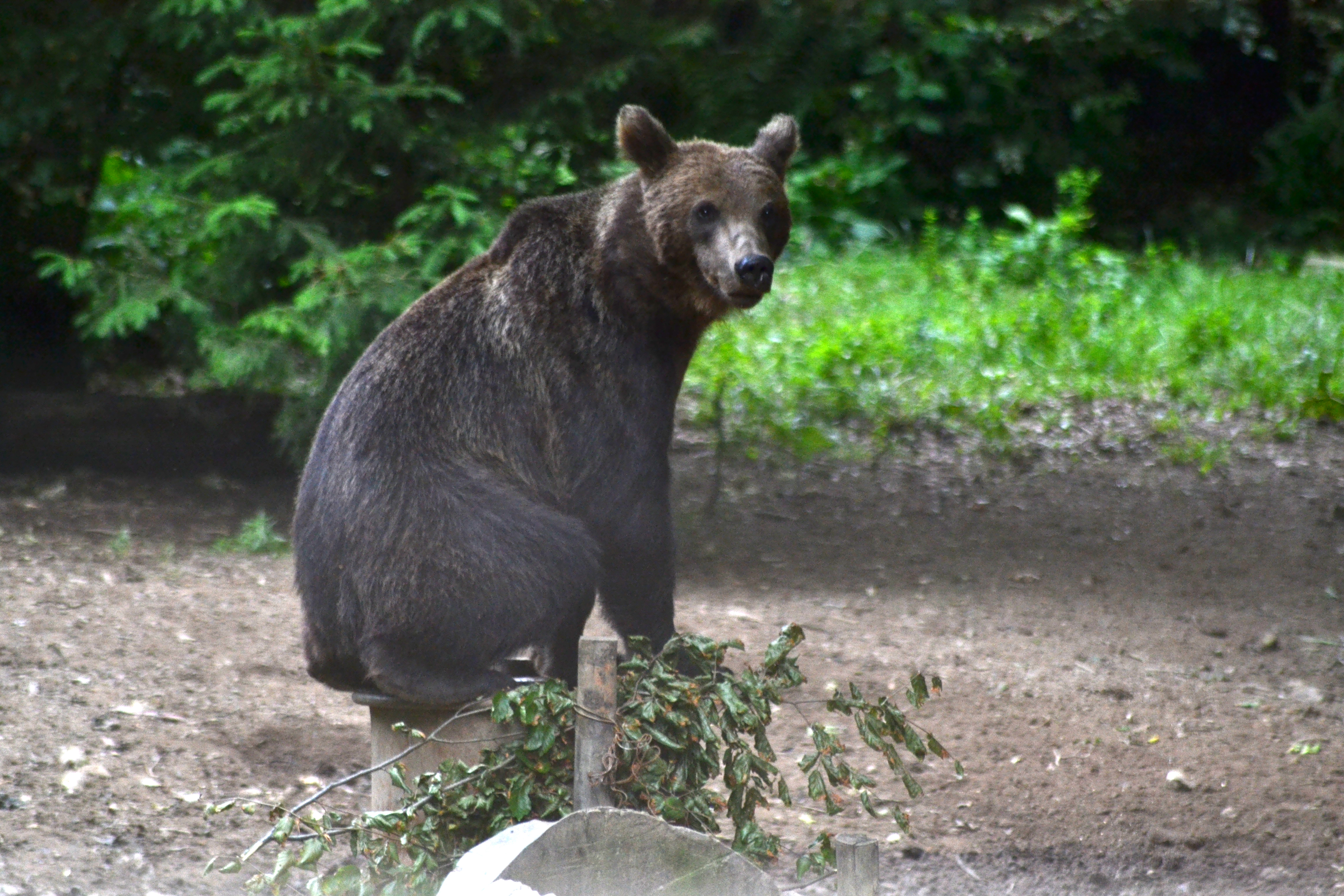 25 de euro, preţul pe care îl plăteşte un turist la Râşnov, pentru a admira sau fotografia urşi, lupi şi râşi. Cât durează sezonul de observare şi ce peisaje spectaculoase pot fi văzute