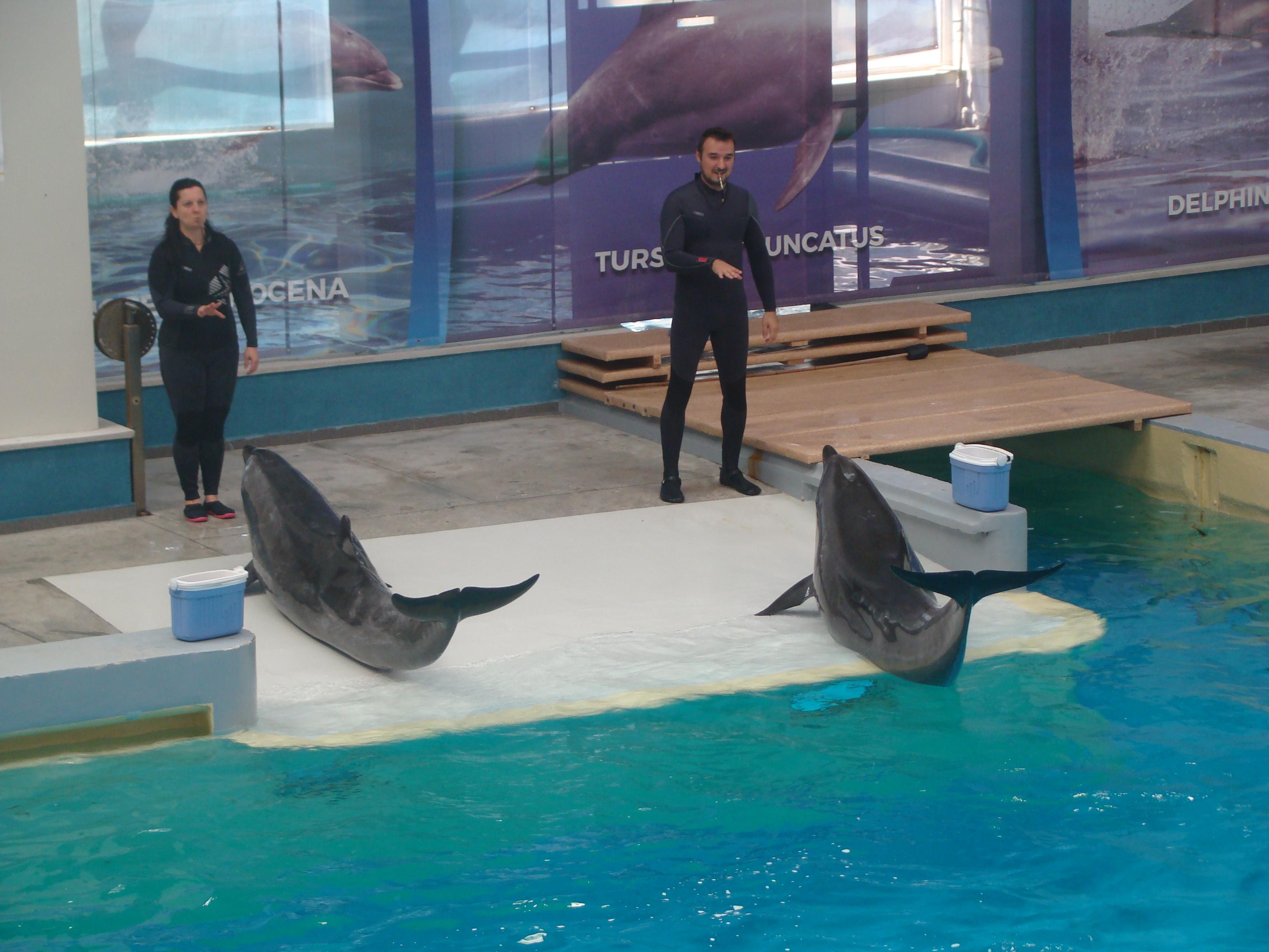 FOTO | Delfinii de la Delfinariul din Constanţa au dat reprezentaţii pe acorduri simfonice