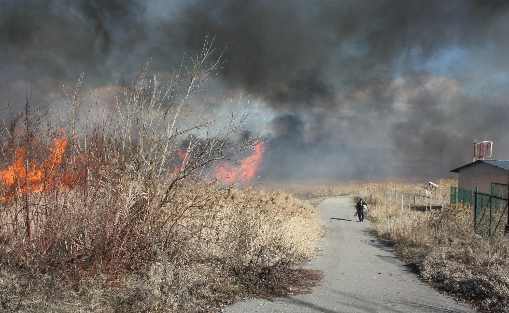 Trafic îngreunat între Centura Capitalei şi Frumuşani, din cauza unui incendiu de vegetaţie