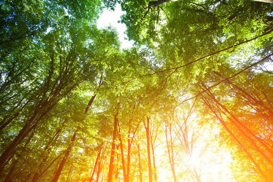 Imaginea articolului PROGNOZA METEO: Vreme caniculară vineri şi sâmbătă. Izolat, temperaturile ajung şi la 37 de grade