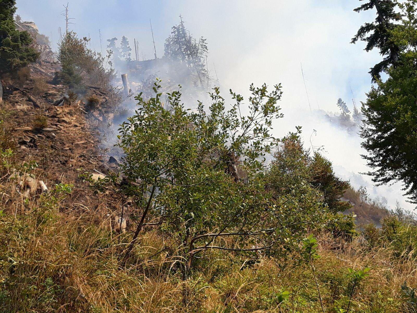 FOTO, VIDEO | Puternic incendiu de pădure de conifere în Bistriţa-Năsăud, unde focul a cuprins opt hectare