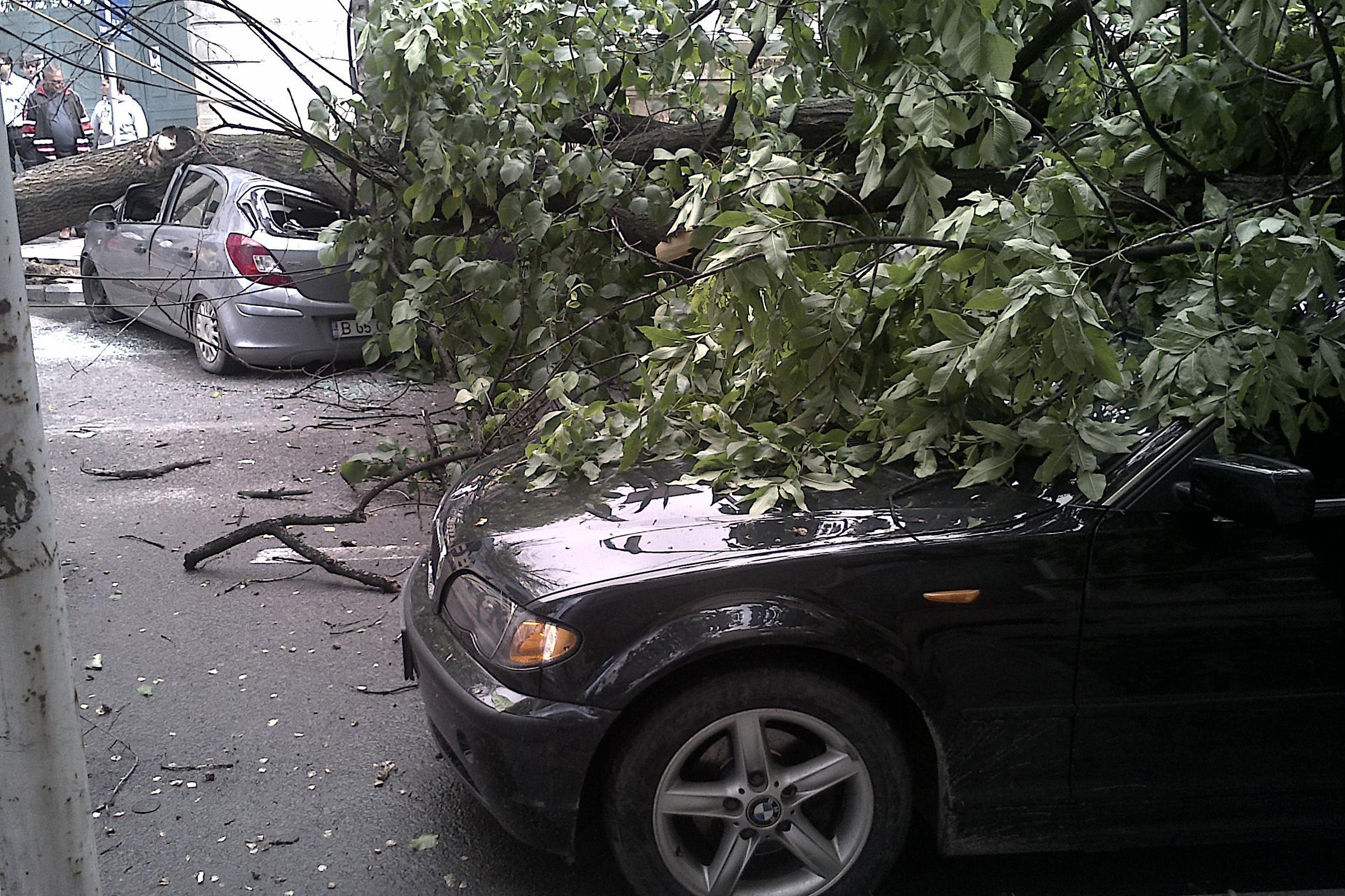Copaci căzuţi pe carosabil, curţi inundate şi o maşină blocată în apă, după vijeliile din Bucureşti şi Ilfov