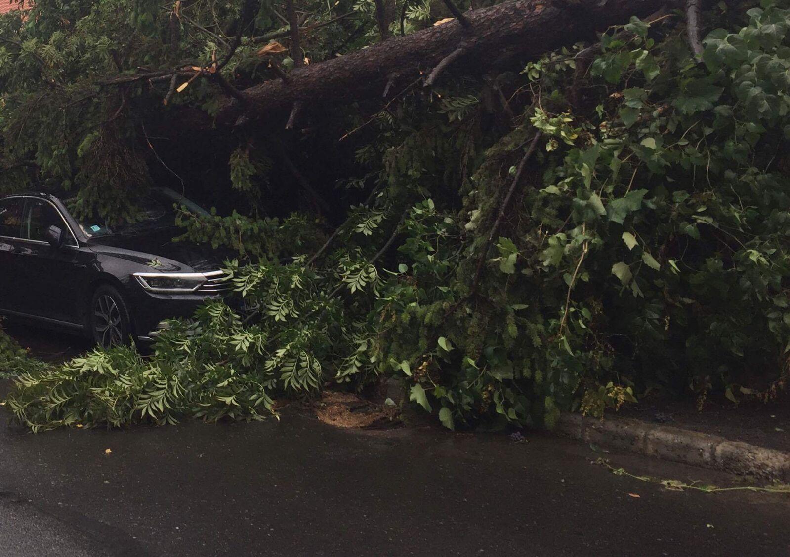 Bilanţ IGSU, după furtunile din România, din ultimele 24 de ore: aproape 200 de copaci doborâţi de vânt şi zeci de acoperişuri avariate. Cele mai multe situaţii de urgenţă, în Cluj