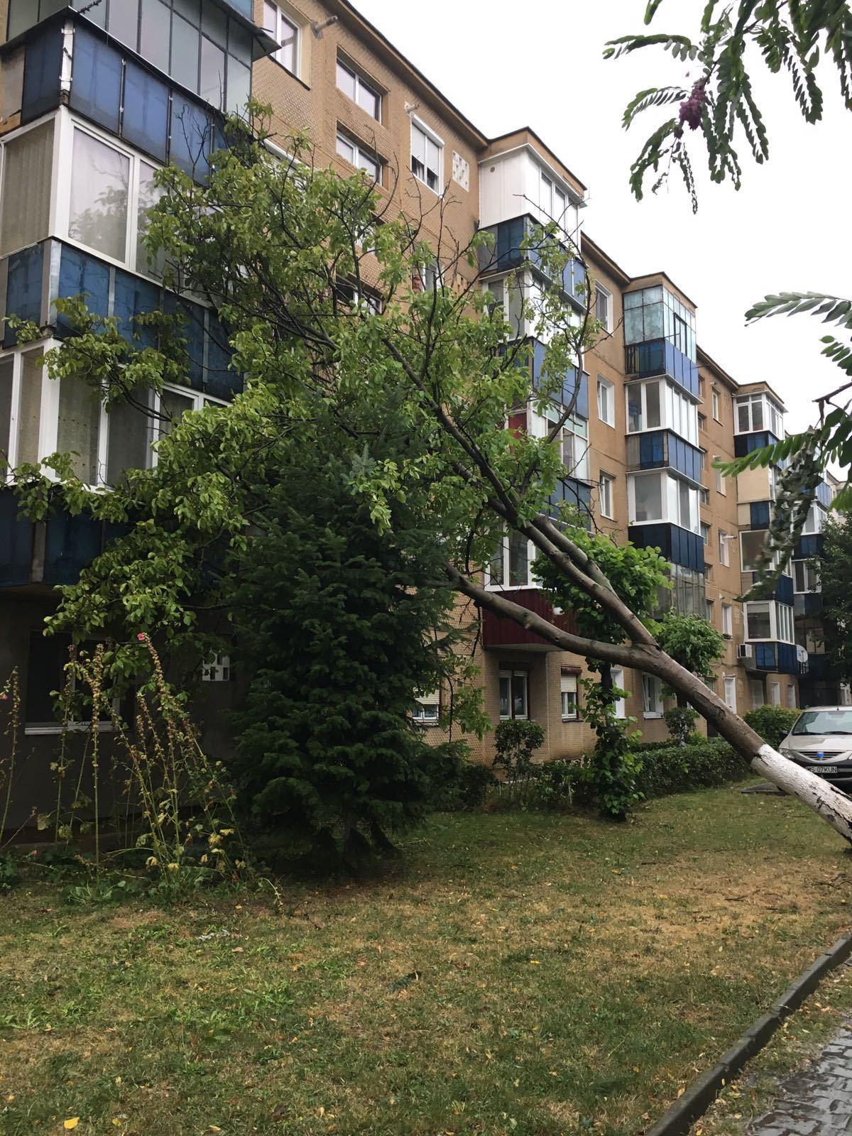 IGSU: Nouă localităţi din şapte judeţe şi Bucureşti, afectate de furtuni în ultimele 24 de ore. Copaci căzuţi peste un restaurant, o  gradiniţă sau cabluri electrice