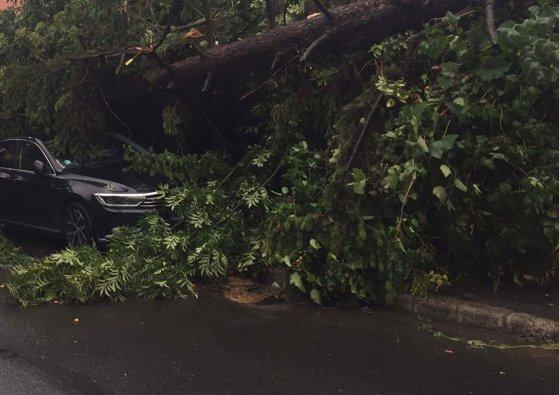 Imaginea articolului Doi oameni, BLOCAŢI în maşină din cauza inundaţiilor din Sinaia. Pe Valea Prahovei au căzut copaci/ În Cluj cinci acoperişuri au fost luate de vântul puternic şi mai multe cabluri de electricitate au căzut pe carosabil