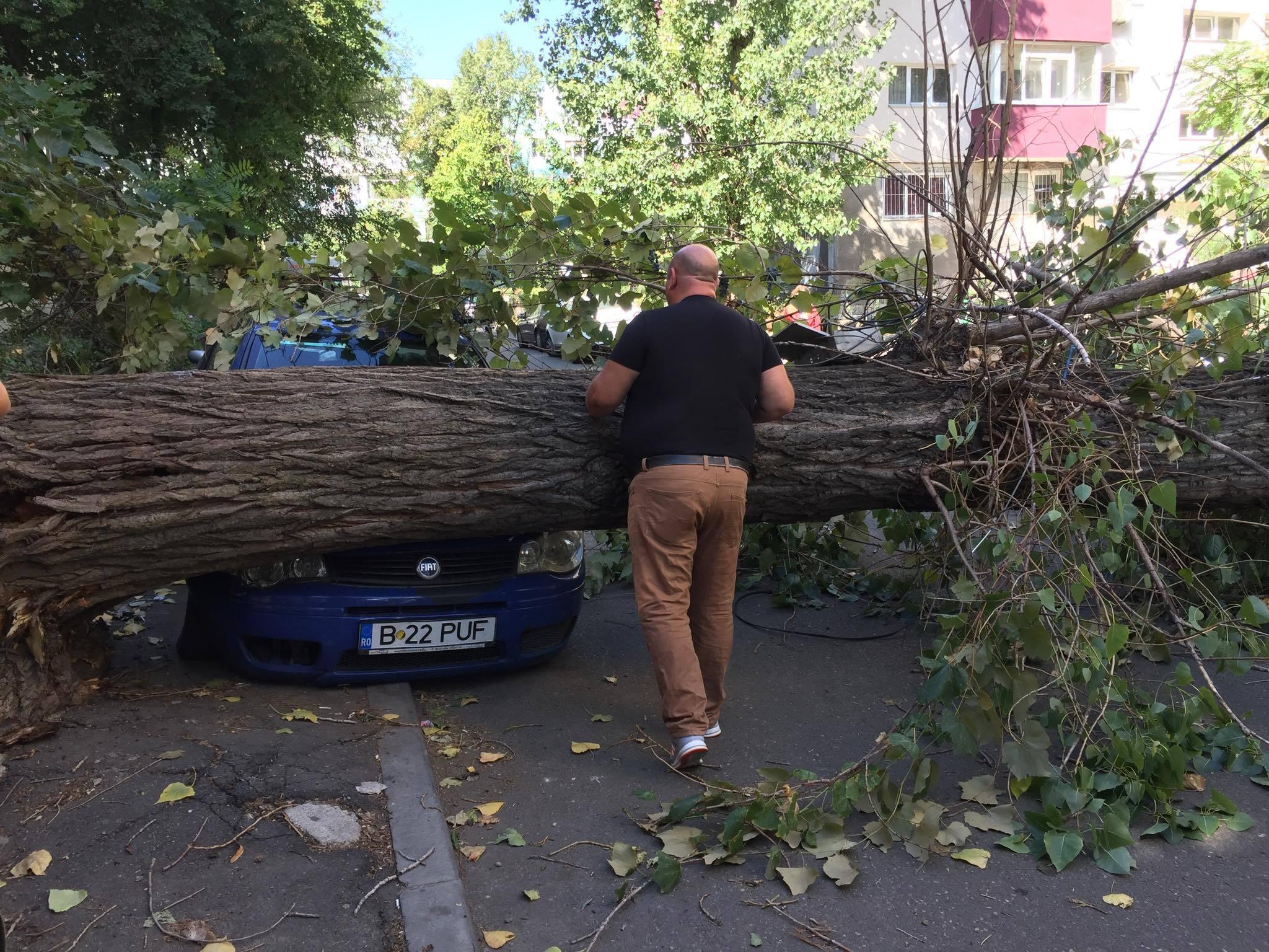 FOTO | Un copac a căzut peste trei maşini, în Sectorul 3 al Capitalei