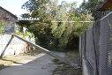 """Imaginea articolului Primarul Timişoarei, despre copacii doborâţi. Ce se va întâmpla cu o parte dintre ei /""""Vom planta alţi 10.500. Ca-n minunatul cântec al copilăriei, Podul de piatră: Vom face altul pe râu în jos, Altul mai trainic şi mai frumos"""""""