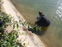 Imaginea articolului Un bărbat şi nepotul acestuia au căzut în râul Dâmboviţa