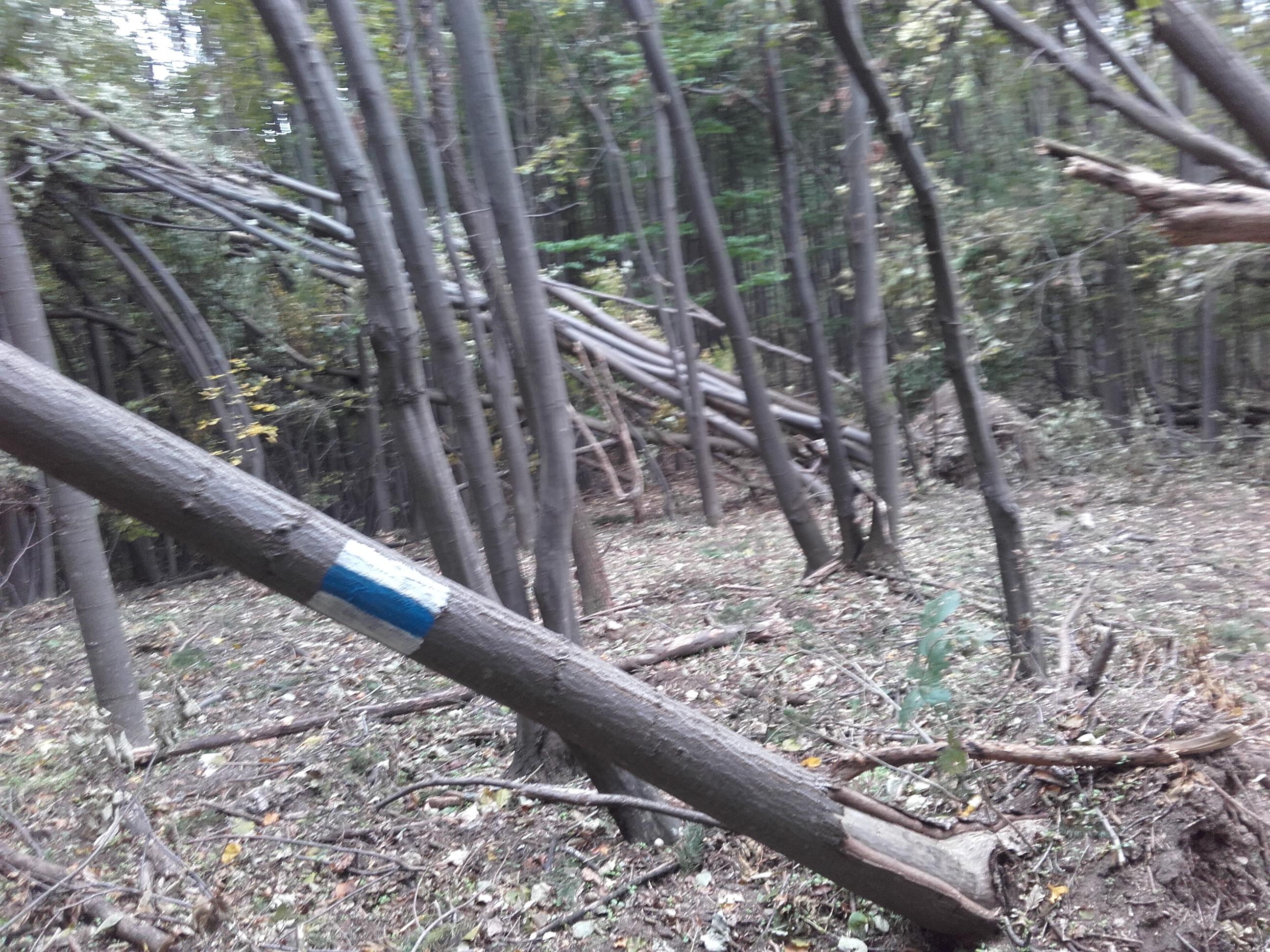 Sute de arbori au fost doborâţi de vânt, blocând porţiuni din traseele montane din Munţii Zărand | FOTO
