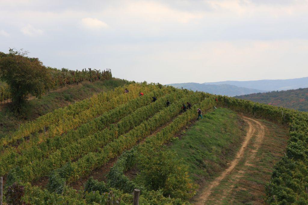 `Vinurile Împăraţilor`, cele mai scumpe din România, reapar pe piaţă/ Cu cât se VINDE o sticlă din celebrul vin de la Lechinţa - FOTO